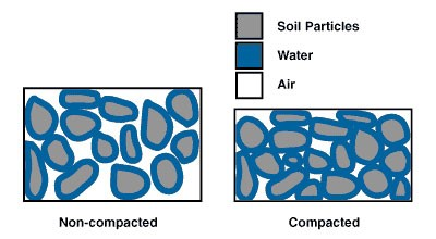 Compacted vs. non-compacted soil