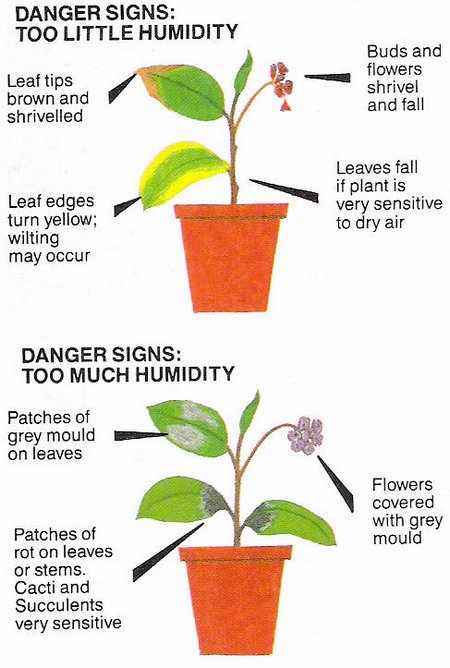 Humidity effects on plants