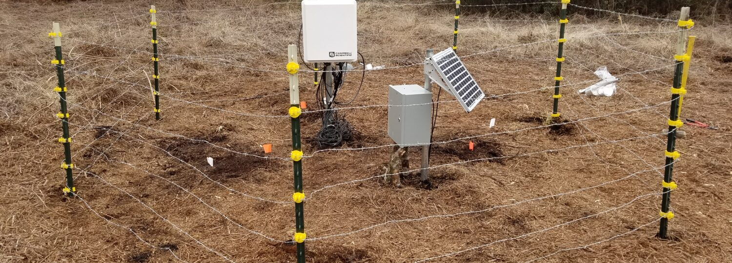 Our organic soil moisture monitoring station on a restored block at the Pocosin Lakes Wildlife Refuge.